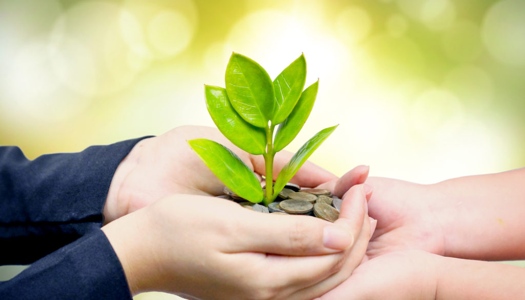hands nurturing green plant light background